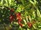WPD-Berries-03c
